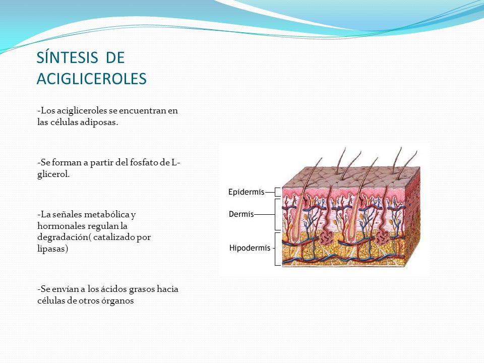 SÍNTESIS DE ACIGLICEROLES