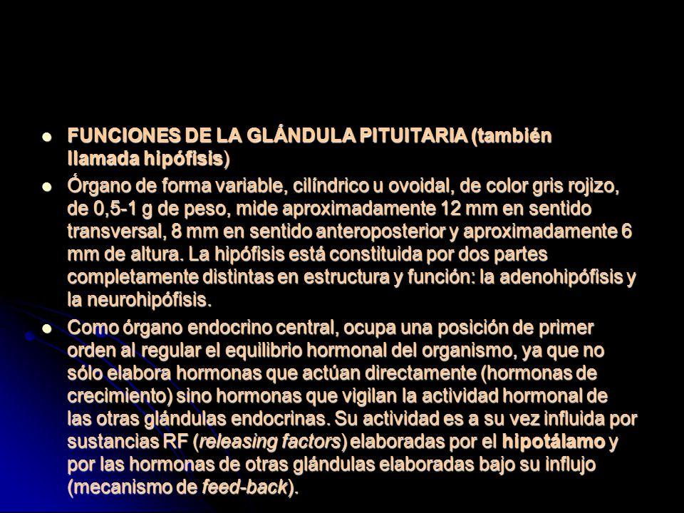 FUNCIONES DE LA GLÁNDULA PITUITARIA (también llamada hipófisis)