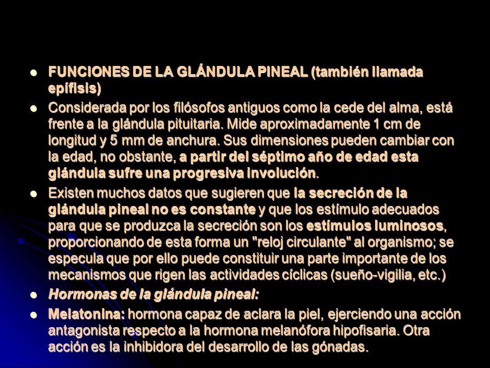 FUNCIONES DE LA GLÁNDULA PINEAL (también llamada epífisis)