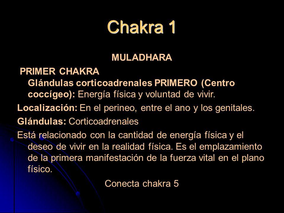 Chakra 1 MULADHARA. PRIMER CHAKRA Glándulas corticoadrenales PRIMERO (Centro coccígeo): Energía física y voluntad de vivir.