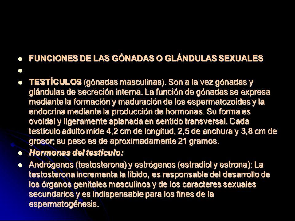 FUNCIONES DE LAS GÓNADAS O GLÁNDULAS SEXUALES