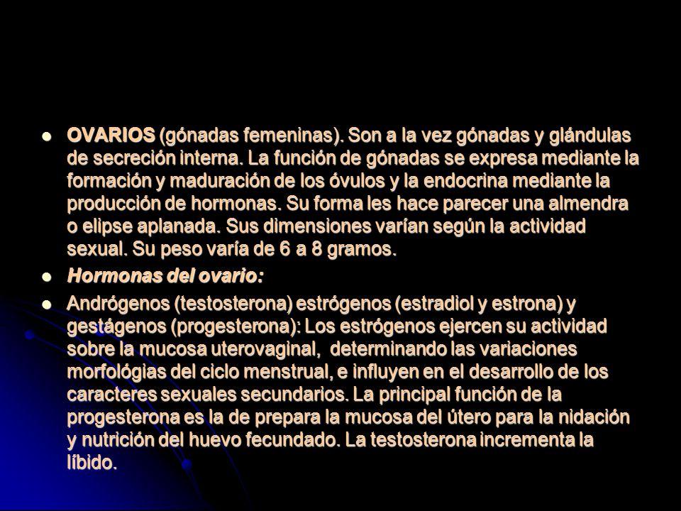 OVARIOS (gónadas femeninas)