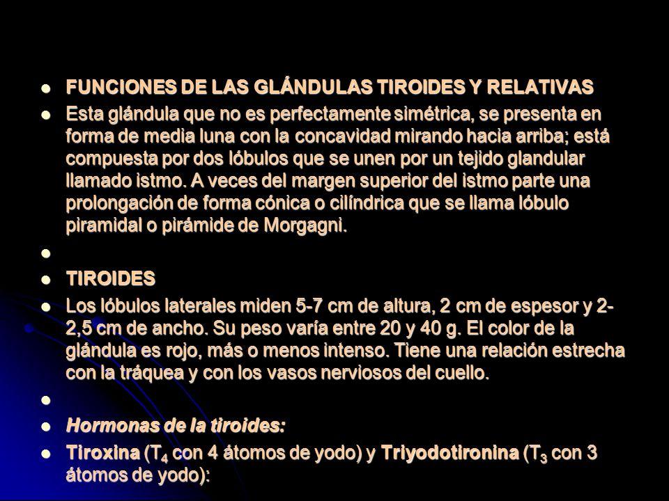 FUNCIONES DE LAS GLÁNDULAS TIROIDES Y RELATIVAS