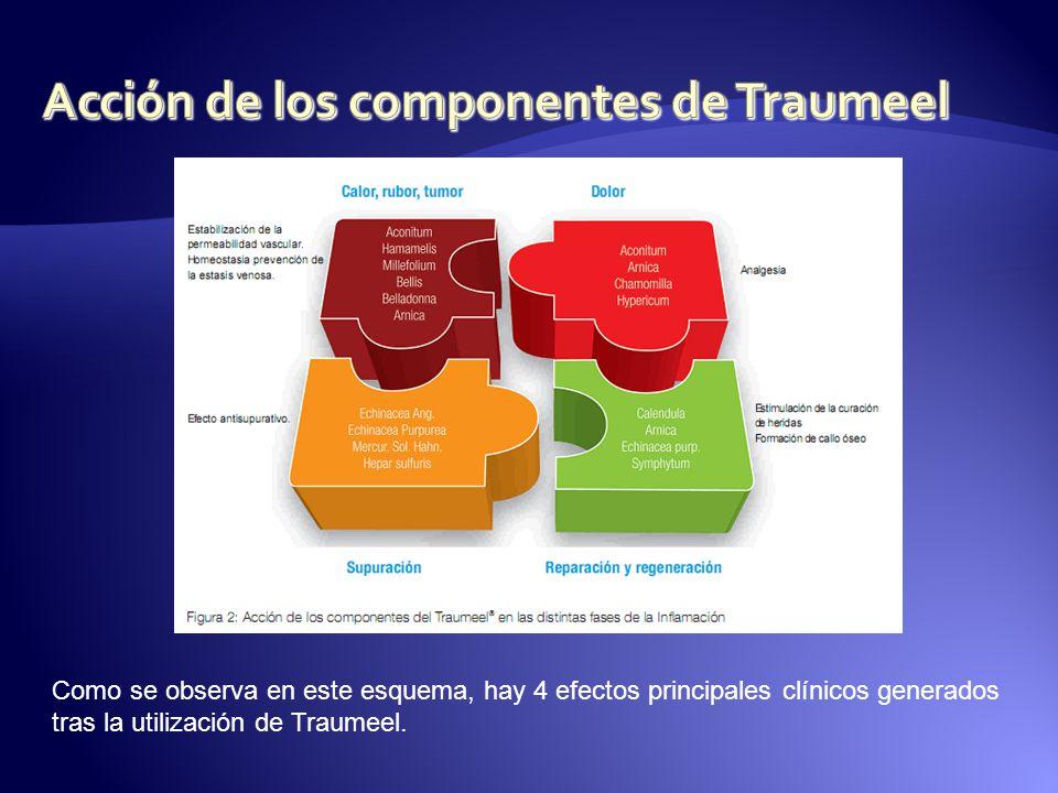 Acción de los componentes de Traumeel