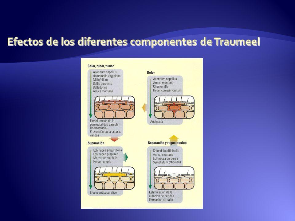 Efectos de los diferentes componentes de Traumeel