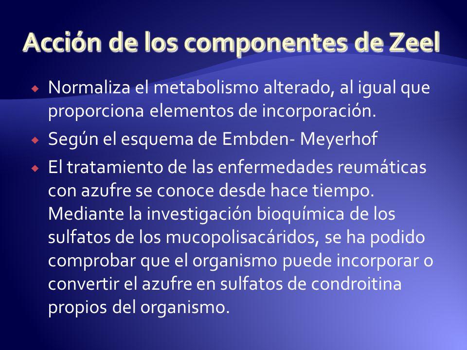 Acción de los componentes de Zeel