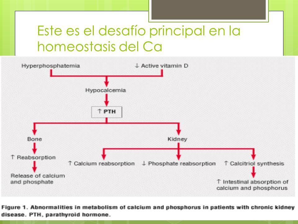 Este es el desafío principal en la homeostasis del Ca