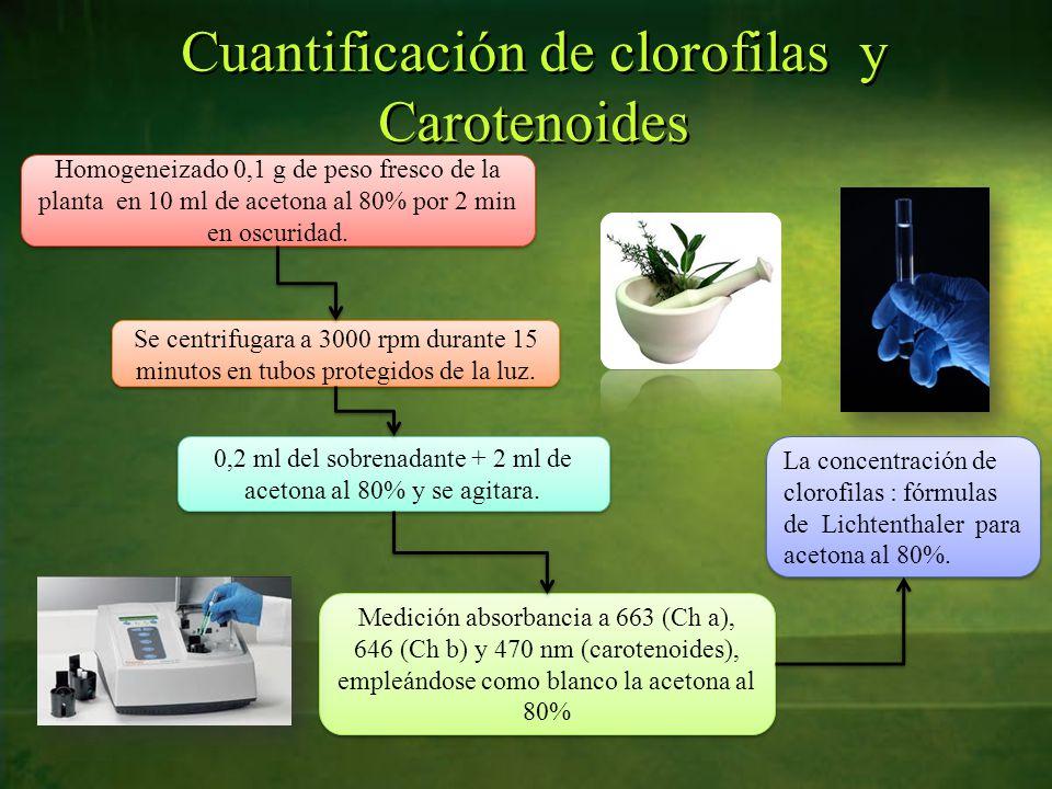 Cuantificación de clorofilas y Carotenoides