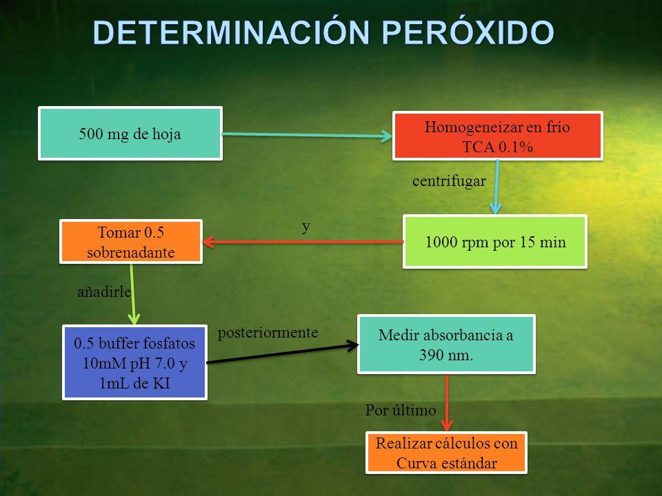DETERMINACIÓN PERÓXIDO