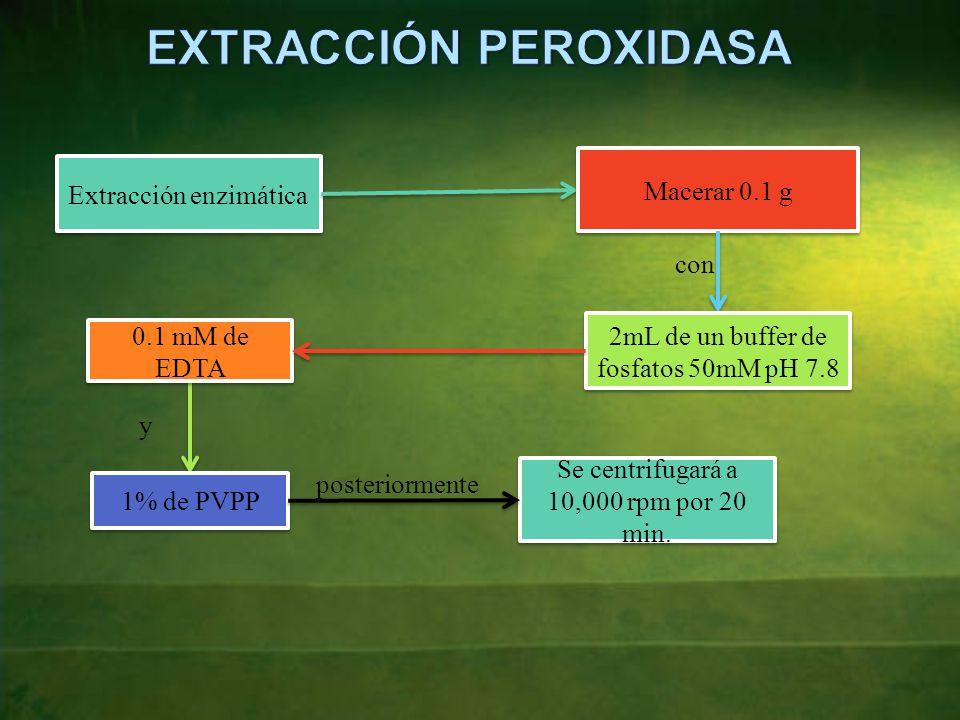 EXTRACCIÓN PEROXIDASA