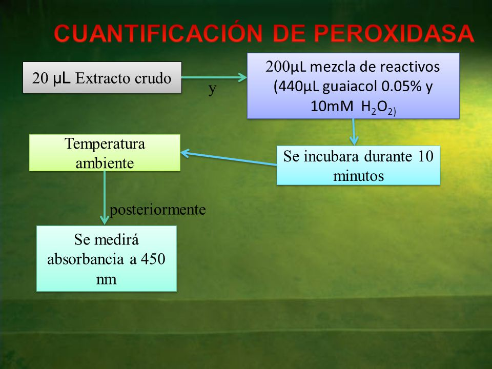 CUANTIFICACIÓN DE PEROXIDASA