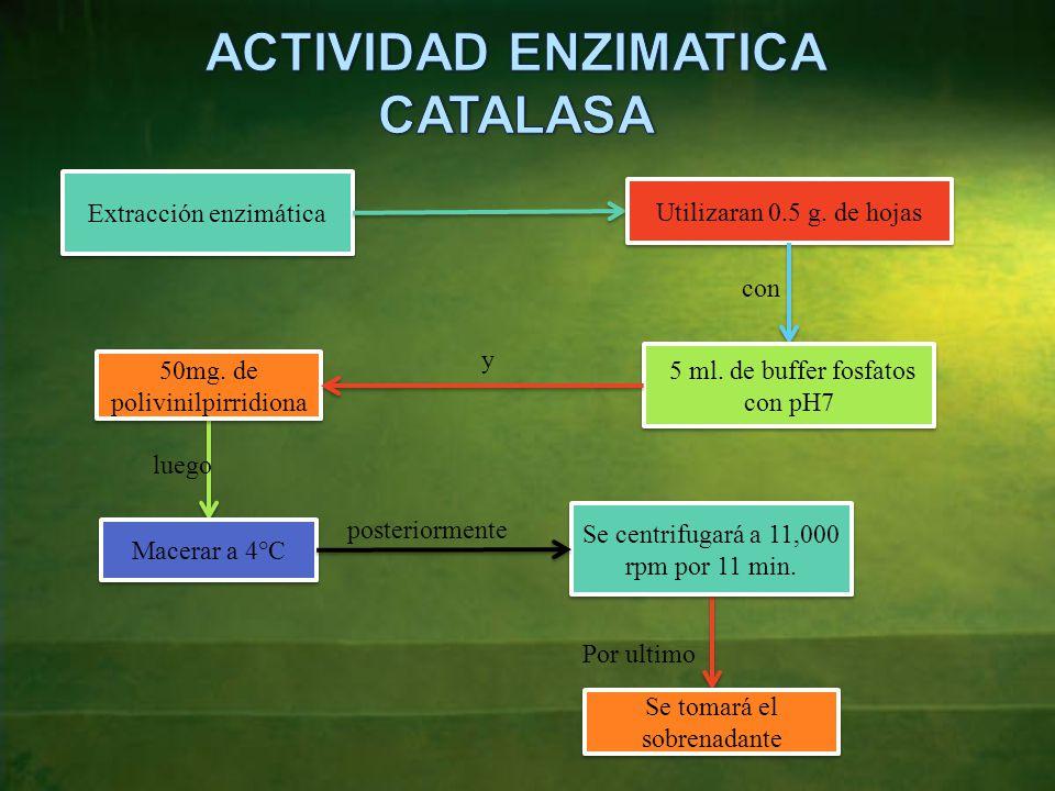 ACTIVIDAD ENZIMATICA CATALASA