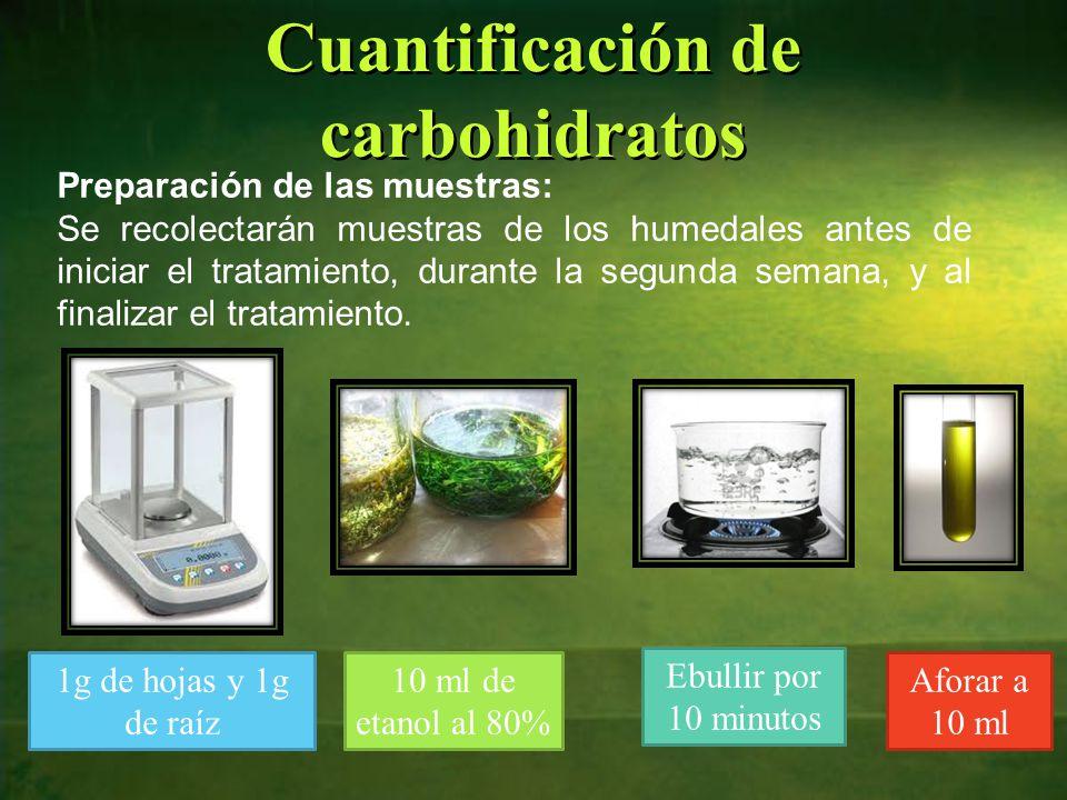 Cuantificación de carbohidratos