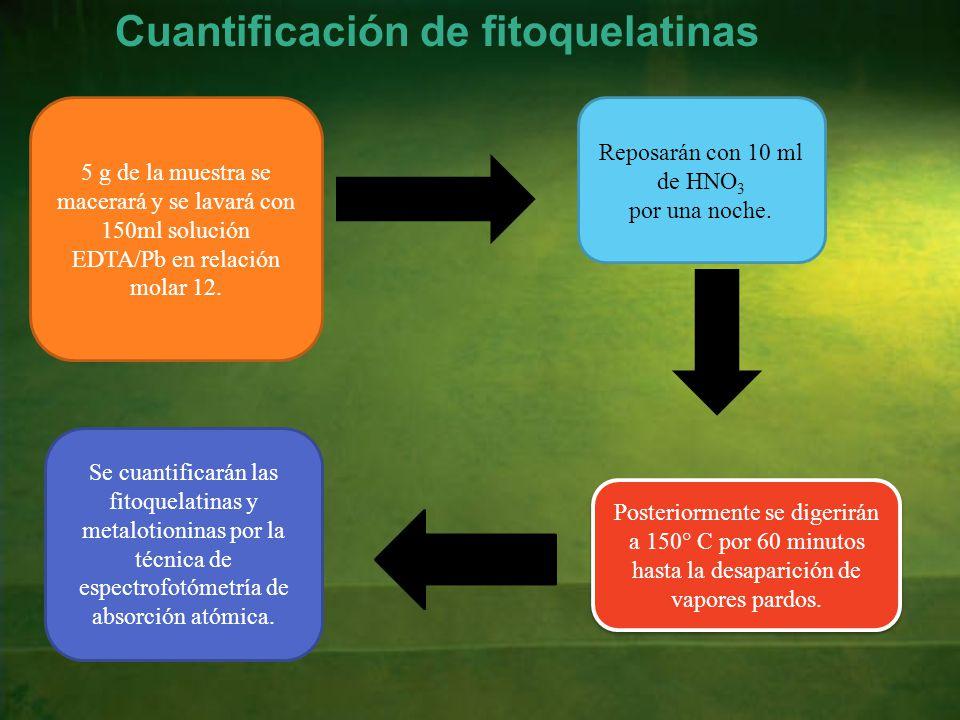 Cuantificación de fitoquelatinas