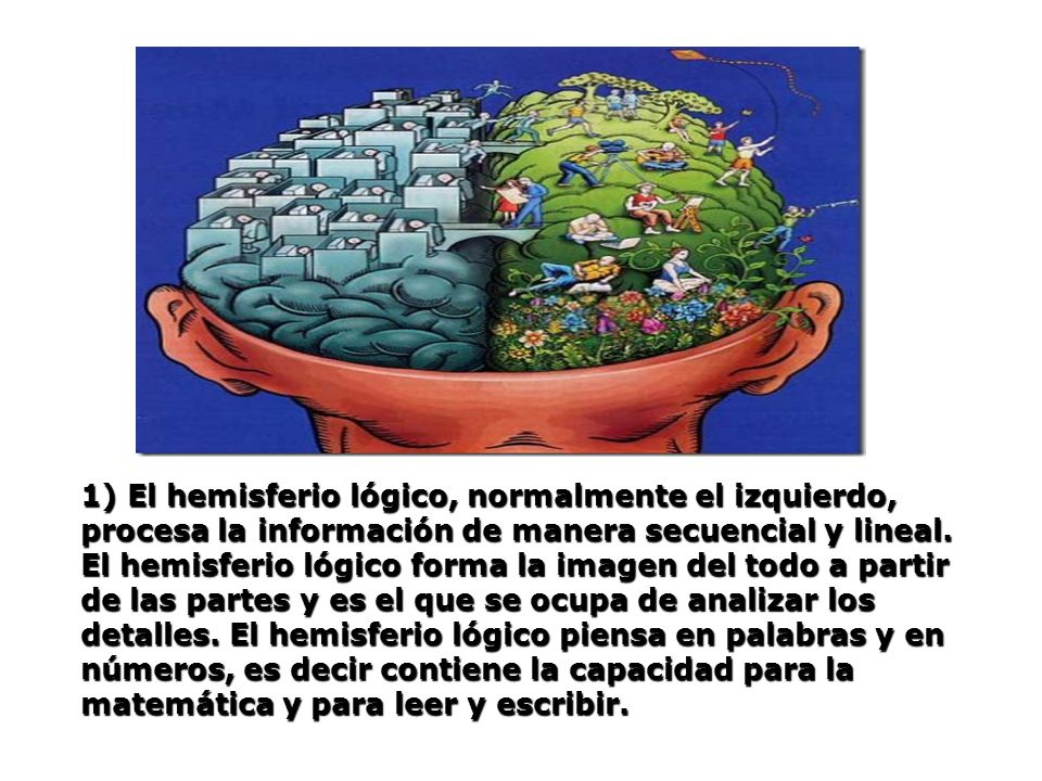 1) El hemisferio lógico, normalmente el izquierdo, procesa la información de manera secuencial y lineal.