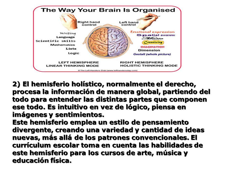 2) El hemisferio holístico, normalmente el derecho, procesa la información de manera global, partiendo del todo para entender las distintas partes que componen ese todo. Es intuitivo en vez de lógico, piensa en imágenes y sentimientos.