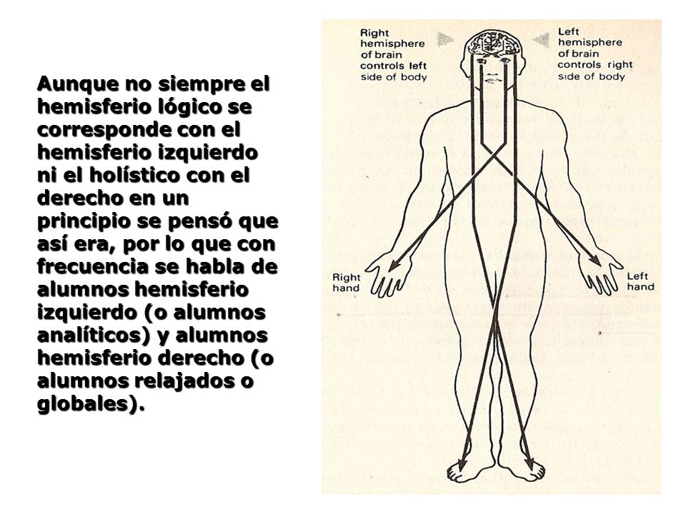 Aunque no siempre el hemisferio lógico se corresponde con el hemisferio izquierdo ni el holístico con el derecho en un principio se pensó que así era, por lo que con frecuencia se habla de alumnos hemisferio izquierdo (o alumnos analíticos) y alumnos hemisferio derecho (o alumnos relajados o globales).