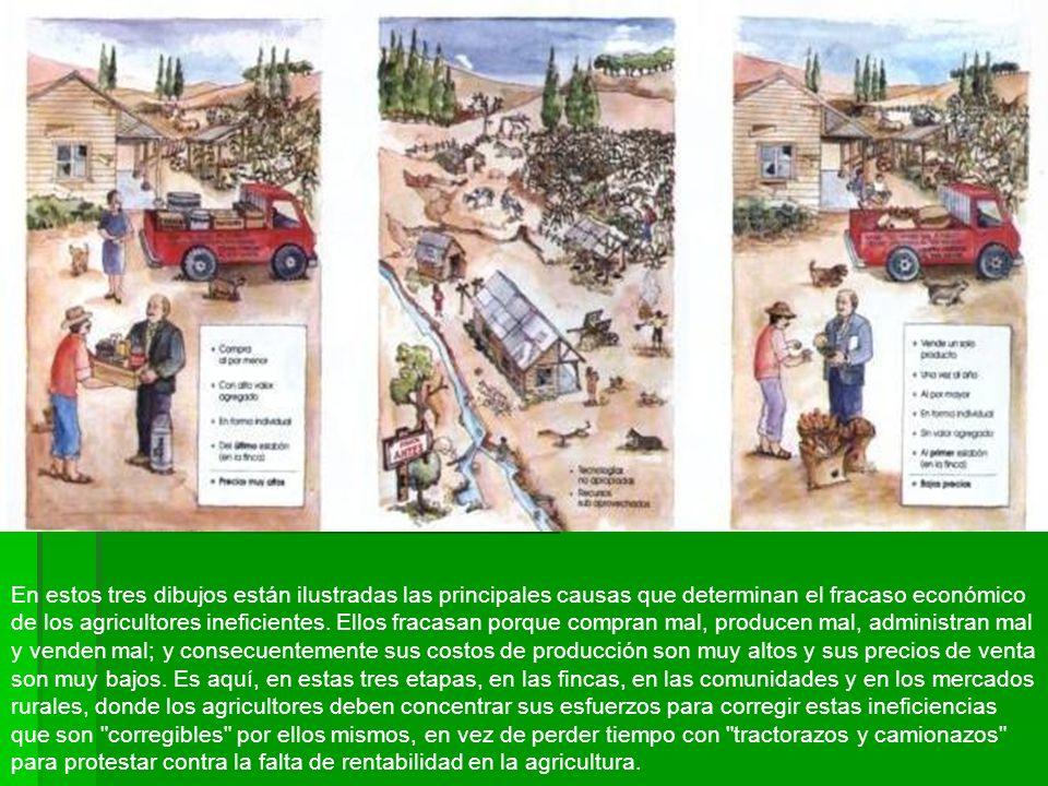 En estos tres dibujos están ilustradas las principales causas que determinan el fracaso económico de los agricultores ineficientes.