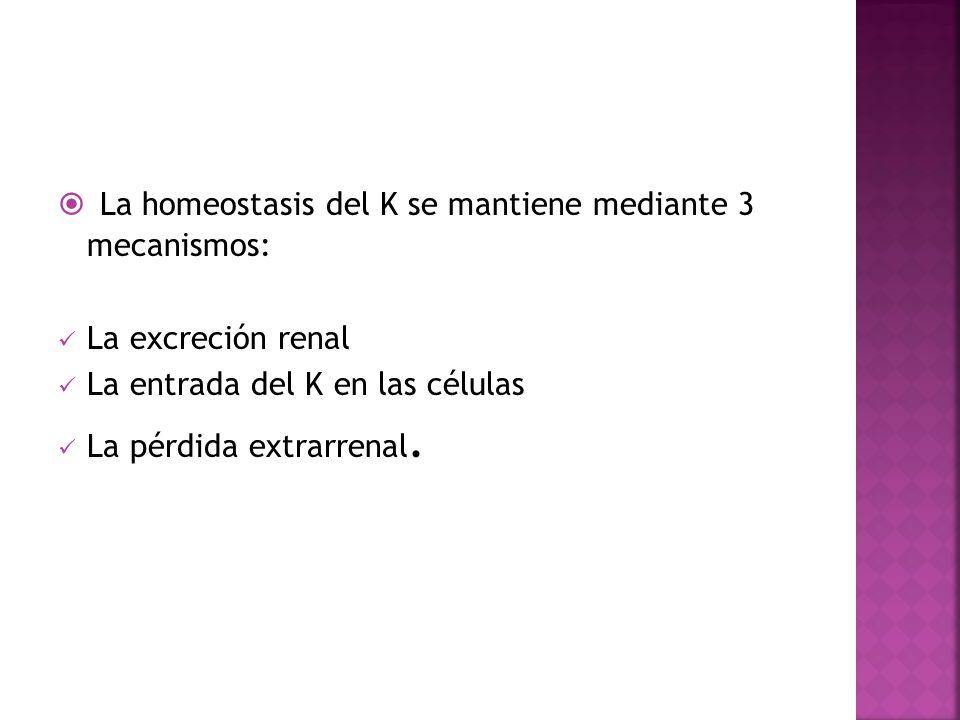 La homeostasis del K se mantiene mediante 3 mecanismos:
