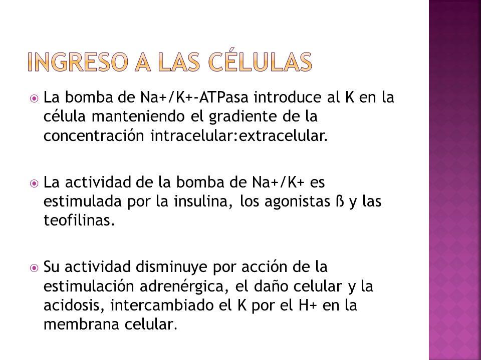 Ingreso a las células La bomba de Na+/K+-ATPasa introduce al K en la célula manteniendo el gradiente de la concentración intracelular:extracelular.
