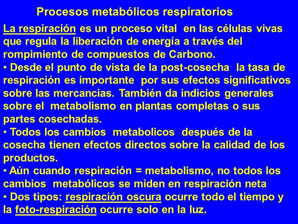 Procesos metabólicos respiratorios