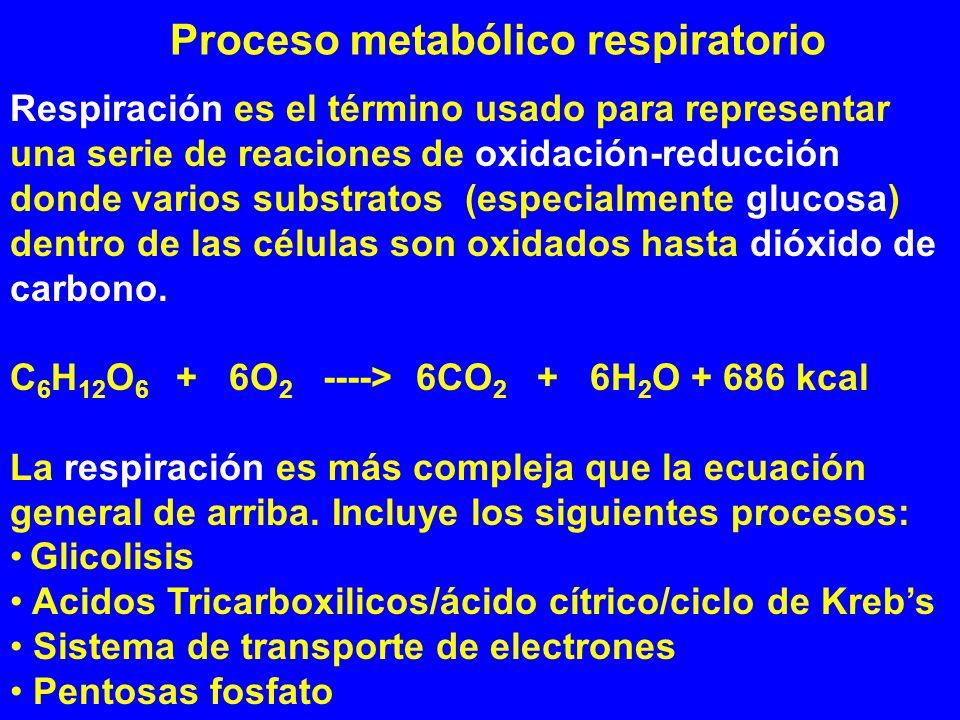 Proceso metabólico respiratorio