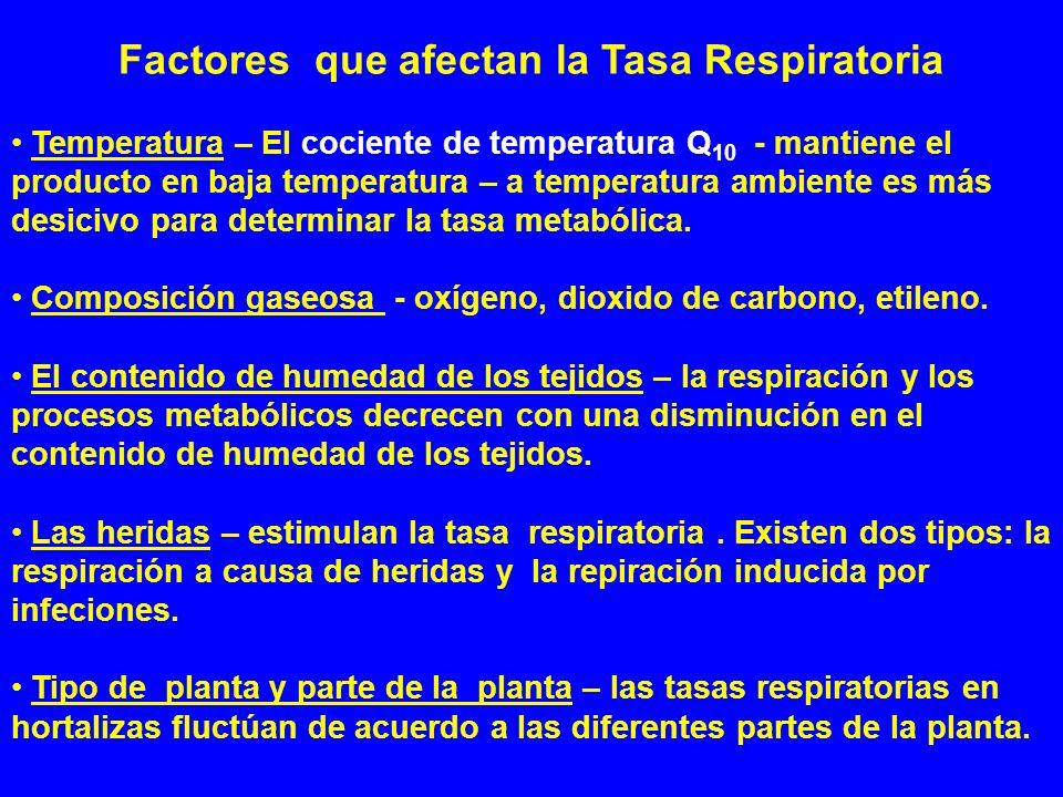 Factores que afectan la Tasa Respiratoria