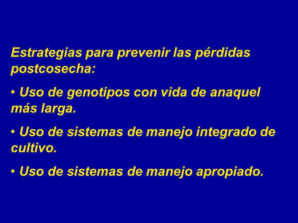 Estrategias para prevenir las pérdidas postcosecha: