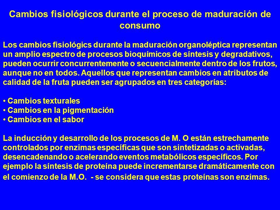 Cambios fisiológicos durante el proceso de maduración de consumo