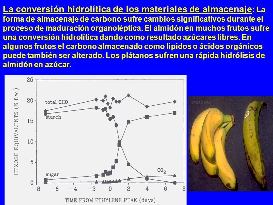 La conversión hidrolítica de los materiales de almacenaje: La forma de almacenaje de carbono sufre cambios significativos durante el proceso de maduración organoléptica.
