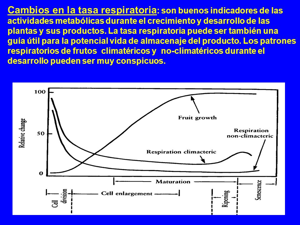 Cambios en la tasa respiratoria: son buenos indicadores de las actividades metabólicas durante el crecimiento y desarrollo de las plantas y sus productos.