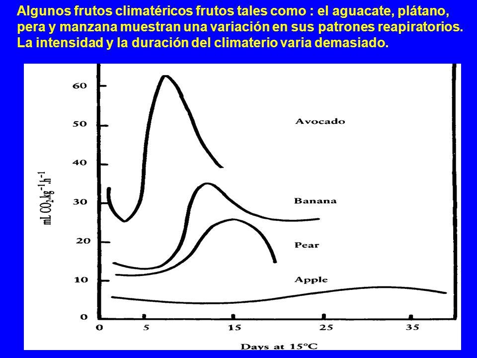 Algunos frutos climatéricos frutos tales como : el aguacate, plátano, pera y manzana muestran una variación en sus patrones reapiratorios.