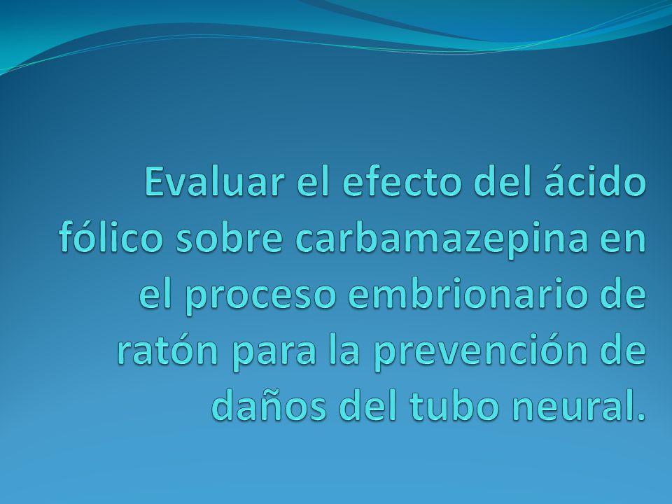 Evaluar el efecto del ácido fólico sobre carbamazepina en el proceso embrionario de ratón para la prevención de daños del tubo neural.