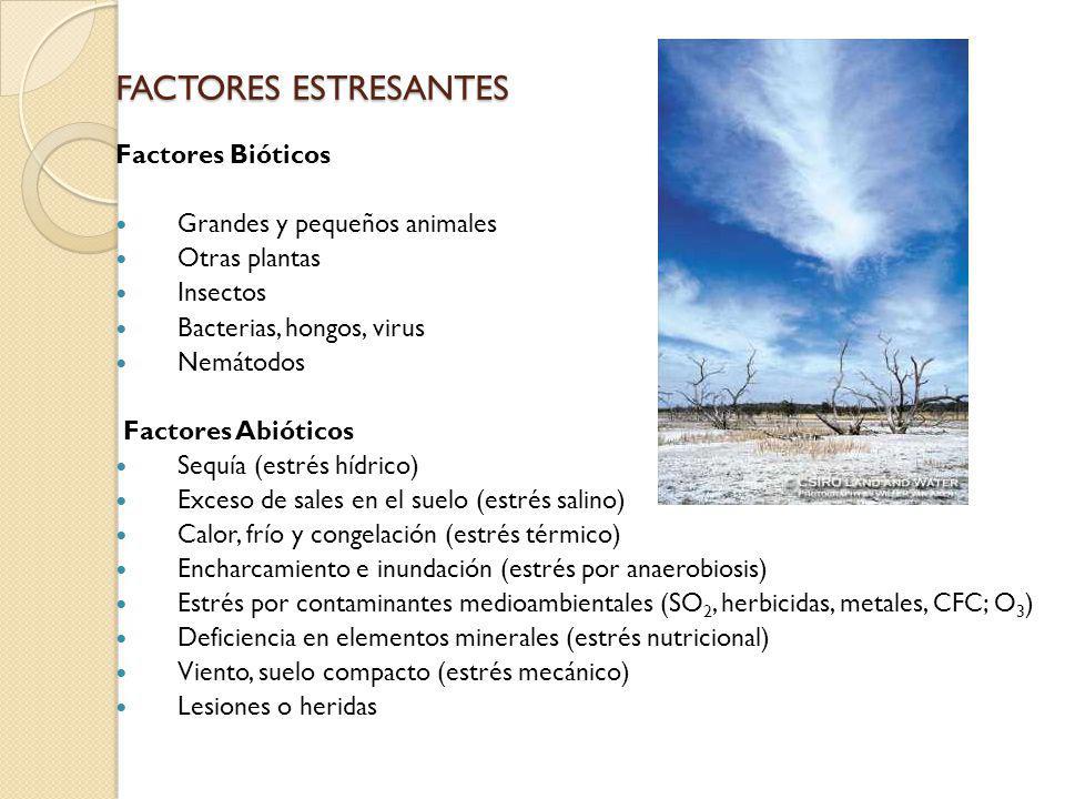 FACTORES ESTRESANTES Factores Bióticos Grandes y pequeños animales