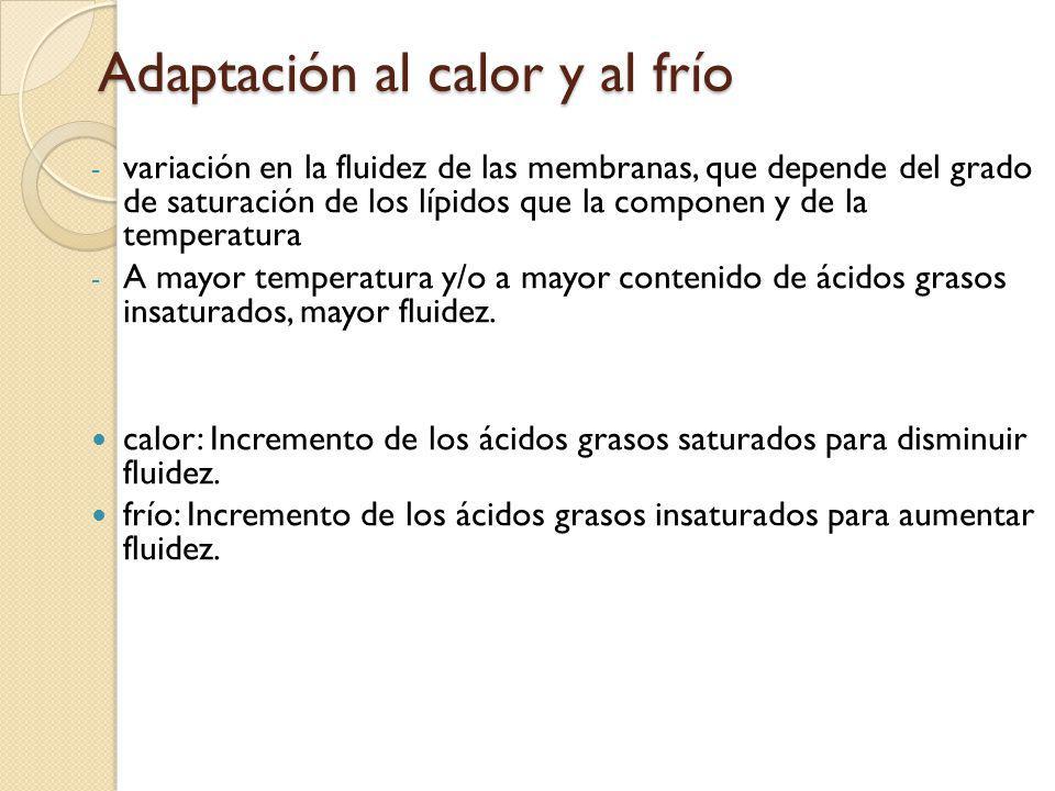 Adaptación al calor y al frío