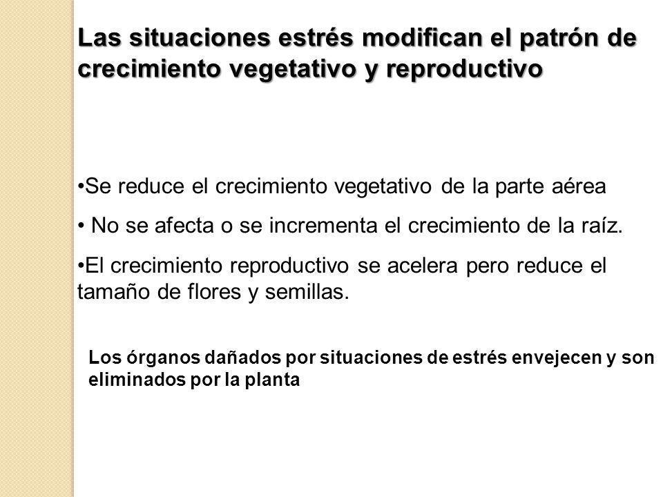 Las situaciones estrés modifican el patrón de crecimiento vegetativo y reproductivo