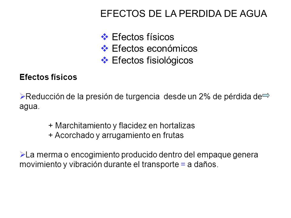 EFECTOS DE LA PERDIDA DE AGUA Efectos físicos Efectos económicos