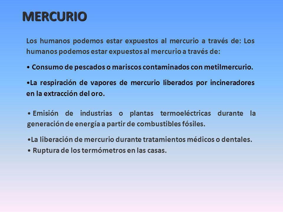 MERCURIO Los humanos podemos estar expuestos al mercurio a través de: Los humanos podemos estar expuestos al mercurio a través de: