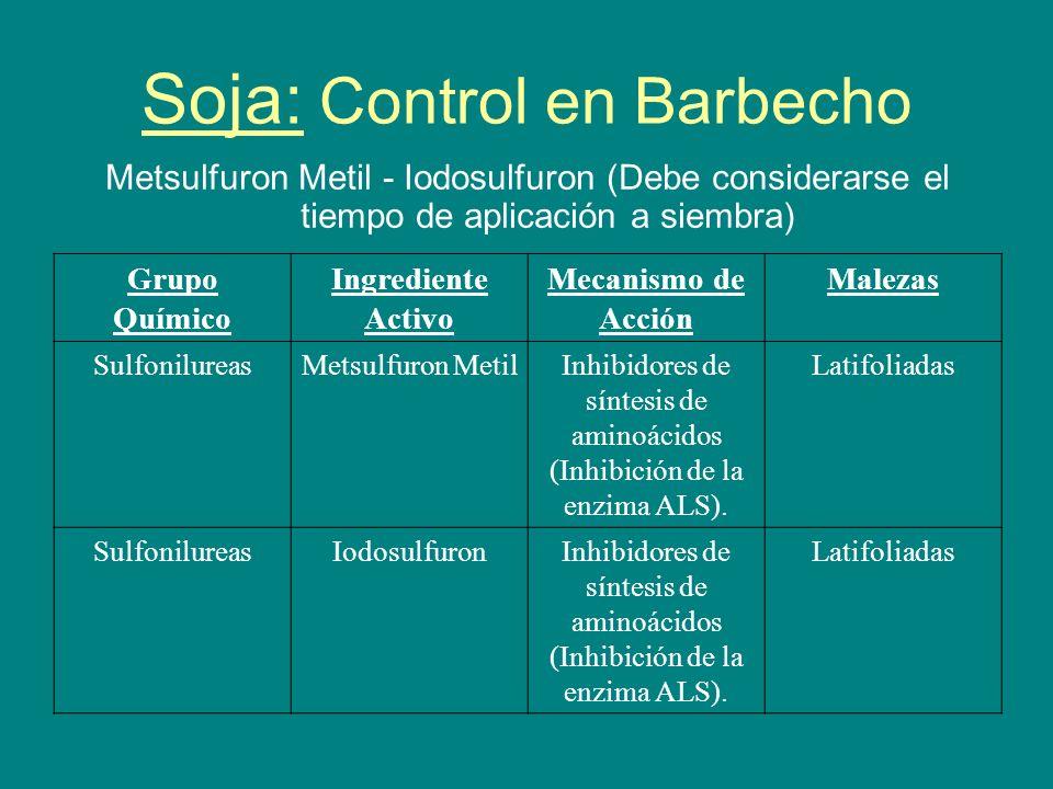Soja: Control en Barbecho