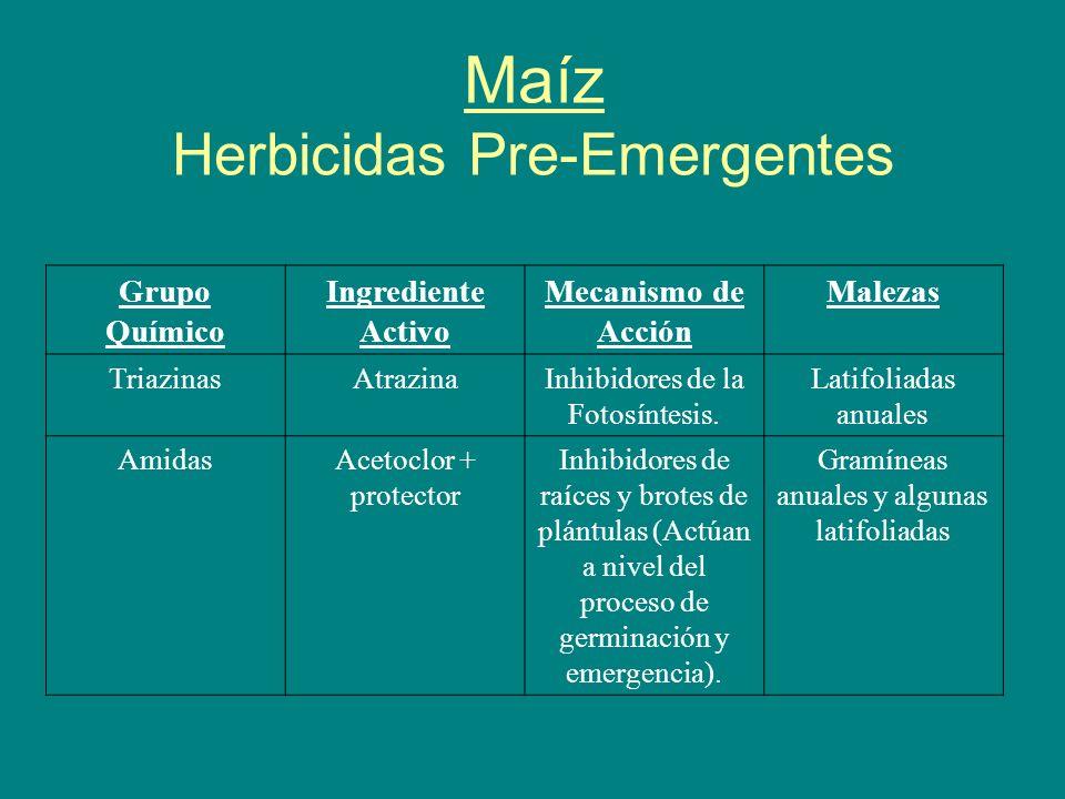 Maíz Herbicidas Pre-Emergentes