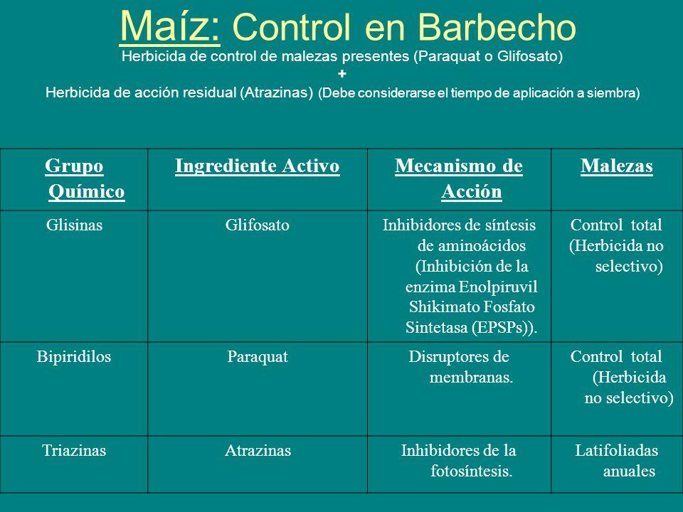 Maíz: Control en Barbecho