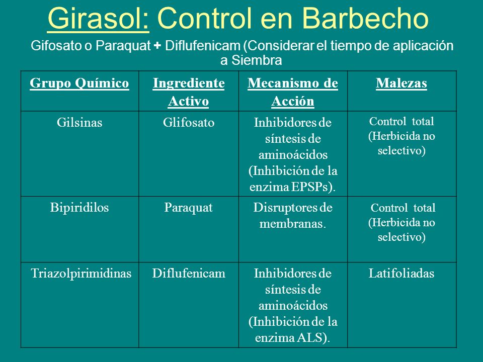 Girasol: Control en Barbecho