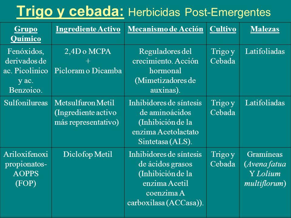 Trigo y cebada: Herbicidas Post-Emergentes