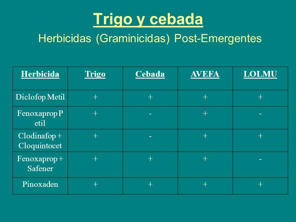 Trigo y cebada Herbicidas (Graminicidas) Post-Emergentes
