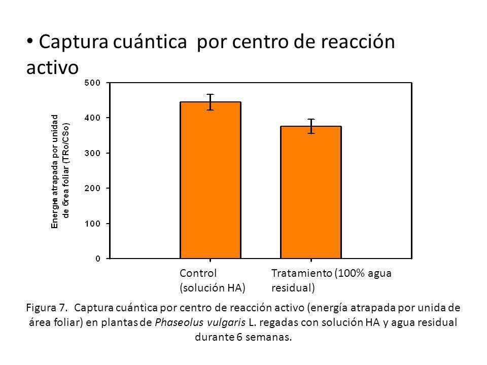 Captura cuántica por centro de reacción activo