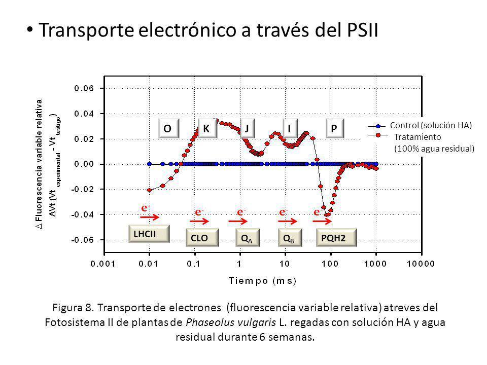 Transporte electrónico a través del PSII