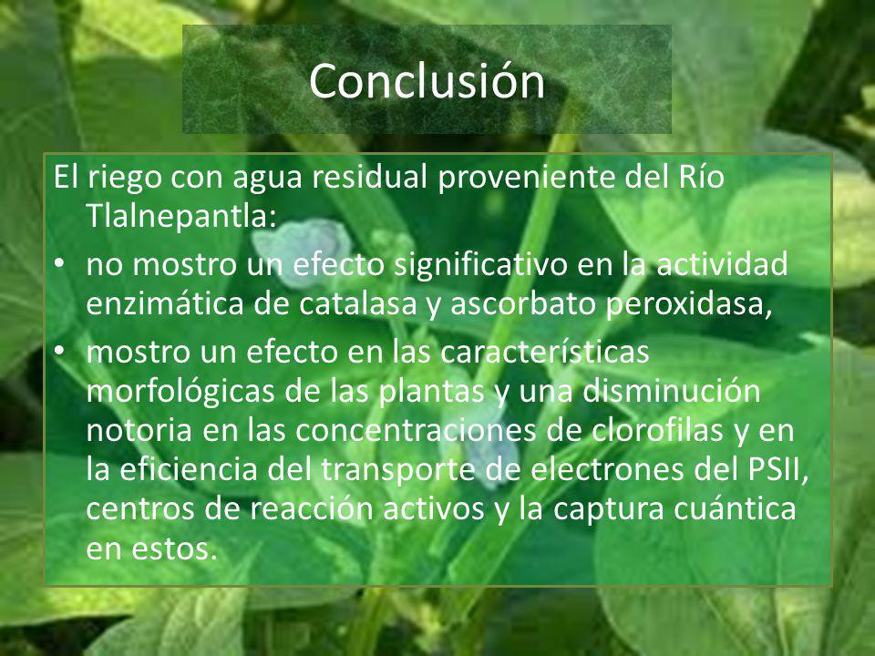 Conclusión El riego con agua residual proveniente del Río Tlalnepantla: