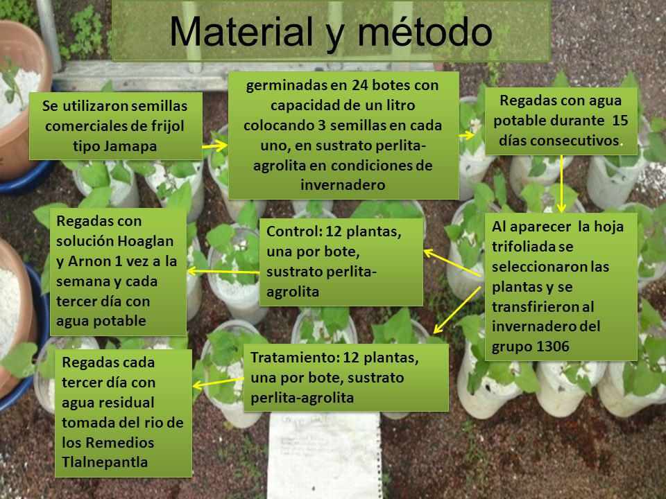 Se utilizaron semillas comerciales de frijol tipo Jamapa