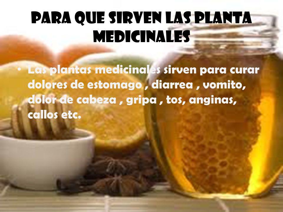 Para que sirven las planta medicinales