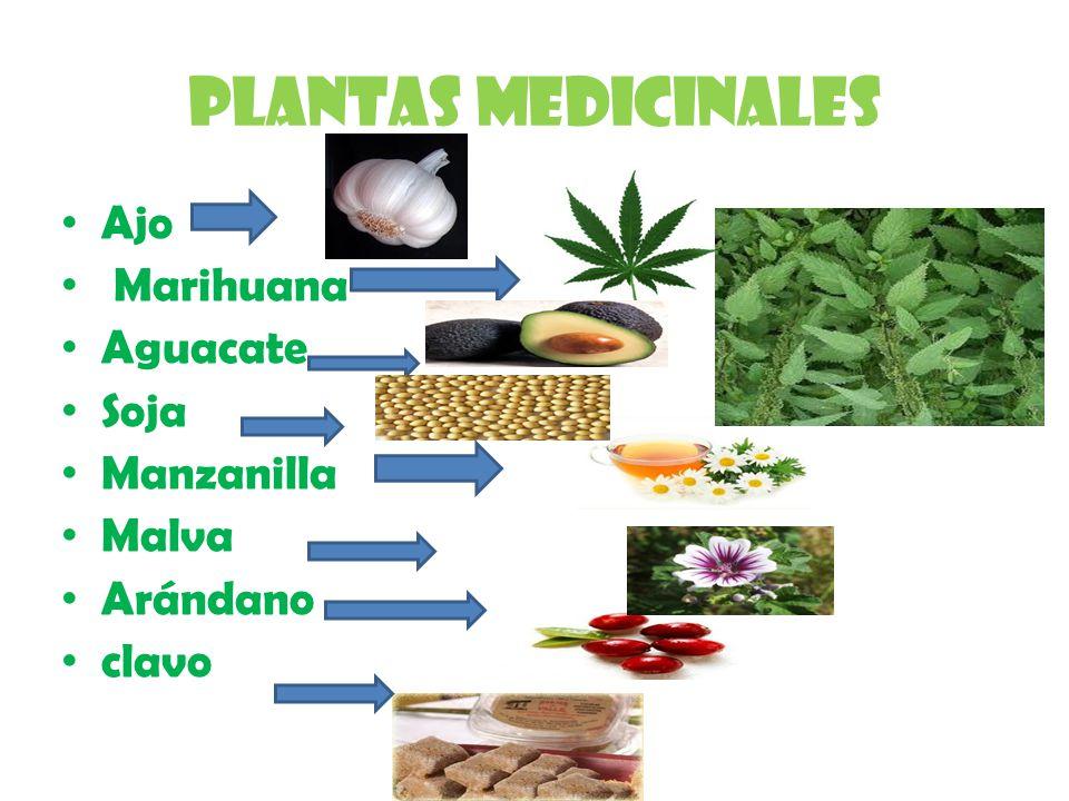 Plantas medicinales Ajo Marihuana Aguacate Soja Manzanilla Malva